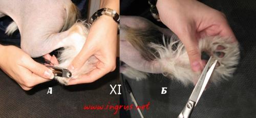 Груминг голой Китайской хохлатой собаки