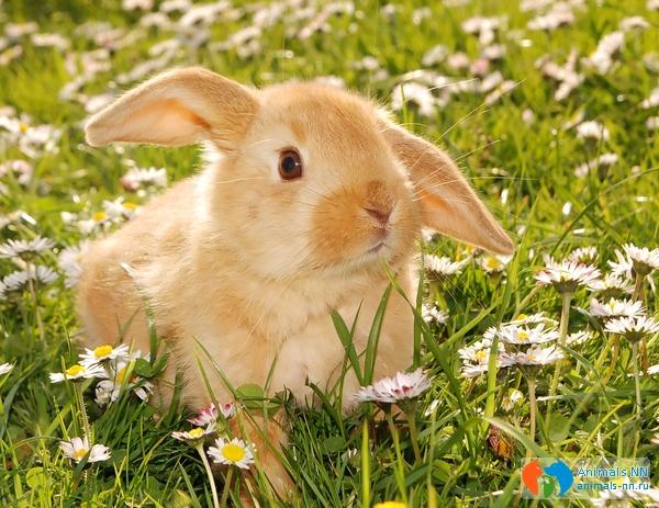 Кролик той уход и содержание