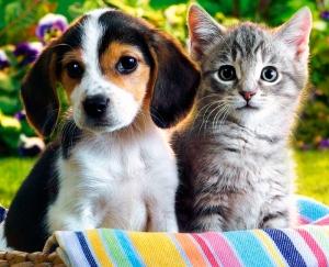 Заболевания ушей у собак и кошек