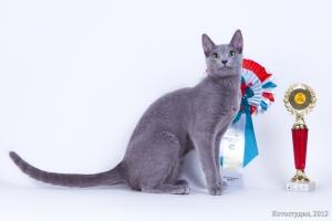 Русская голубая кошкаНижегородское серебро