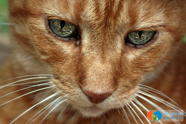 White And Brown Cat With Green Eyes