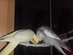 Покупка попугая, где лучше приобрести