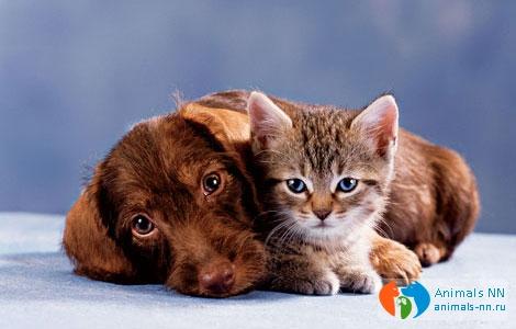 Вакцинации кошек