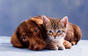 5 заблуждений о вакцинации кошек и собак