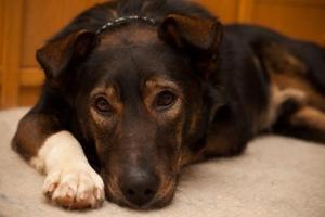 Пёс барбос и его чудесная история. Часть 2