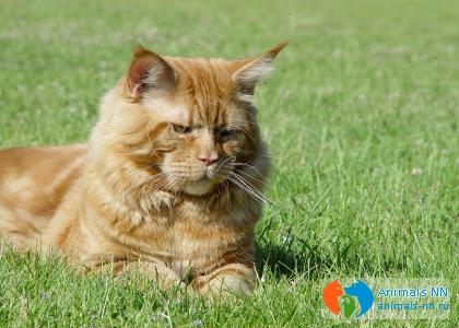 Заводчики и питомники кошек